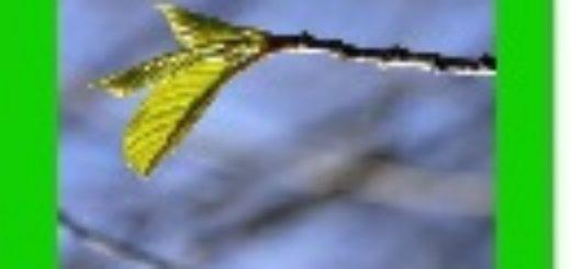 Ikona glas ocine 2014